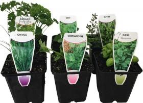 Herb-Plants on sale
